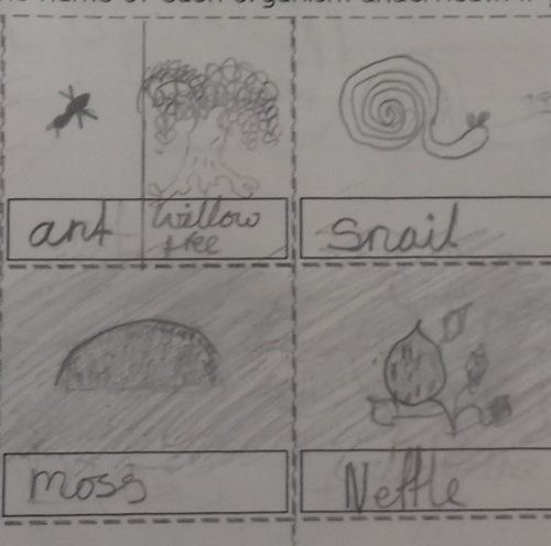 Living Things and Their Habitats 1