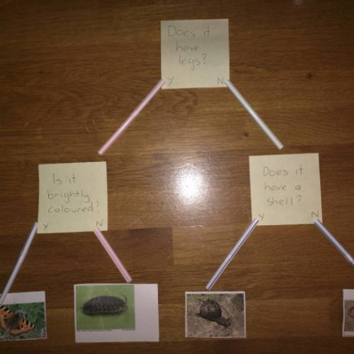 Living Things and Their Habitats 4